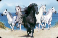 Animal email backgrounds. Five Horses