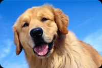 Animal email backgrounds. Smiling Happy Dog
