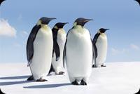 Beautiful Penguins Background