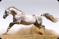 Animal email backgrounds. Running Horse