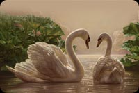 Love Swans On The Lake Background