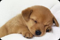 Animal email backgrounds. Cute Puppy Sleeping
