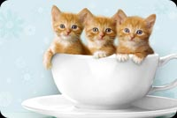Cute Kitties In A Tea Cup Background