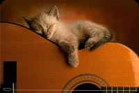 Baby Cat Sleeping On Guitar Background