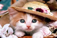Cute Little Cat With Hat Background