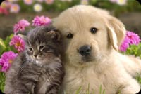 Cute Kitten Cat And Puppy Dog Background