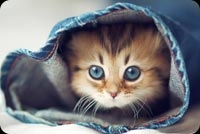 Cute Little Kitten In A Jean Background