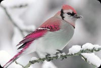 Pretty Pink Bird Background