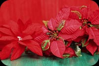 Christmas Red & Green Background