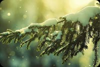 Christmas email backgrounds. Christmas Tree Branches Snow