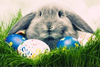 Easter email backgrounds. Happy Easter Day