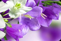 Beautiful Easter Flowers & The Cross Background