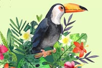 Toucan Stationery Background