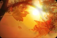 Fall autumn email backgrounds. Fabulous Fall