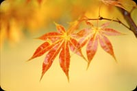 The Spirit Of Autumn Background