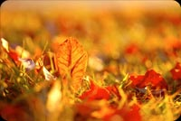 Beautiful Fall Leaves Background