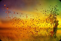 Fall autumn email backgrounds. Amazing Fall