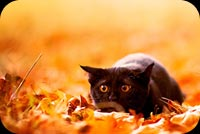 Fall autumn email backgrounds. Missing You This Autumn