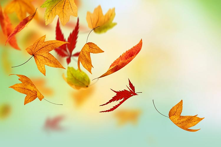 Fall Autumn Email Backgrounds | EmailBackgrounds.com