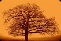 Big Autumn Tree Background