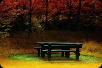 Autumn In The Park Background
