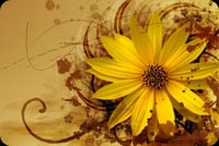 Warm Abstract Flower Background