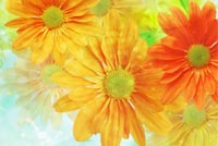 Vivid Flowers Background Background