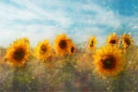 Sun Flowers Painting Background