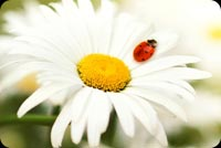 Flowers email backgrounds. Lady Bug