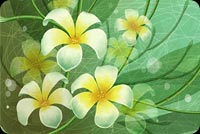Flower Art Green & Yellow Background