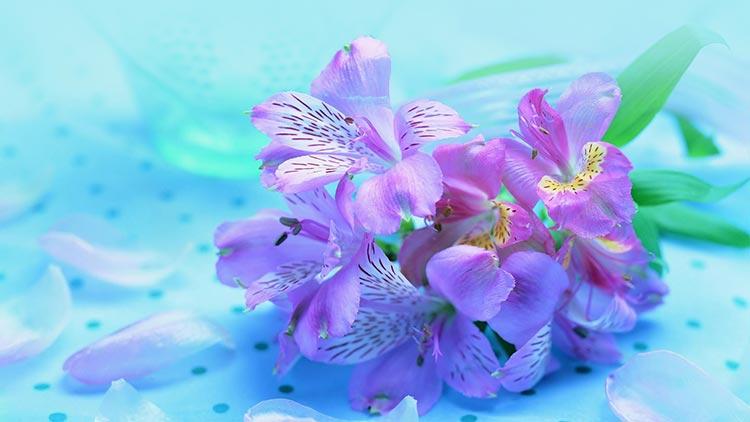 Flowers email stationery stationary pretty purple flowers mightylinksfo