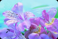 Pretty Purple Flowers Background
