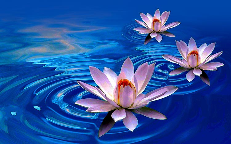 Flowers Email Stationery Stationary Lotus Flower Art Painting