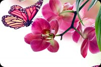 Beautiful Spring Flower & Butterfly Background