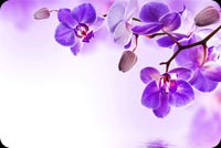 Purple Orchid Flowers Reflection Water Background