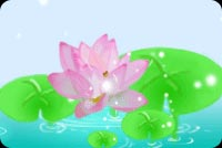 Blooming Lotus Background