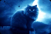 Halloween email backgrounds. Moon Night Black Cat