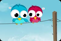 Love  Birds Background
