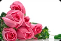 Pink Roses For You Background