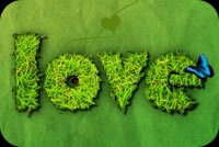 Green Love & Butterfly Background