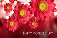 Flowers For Mom On Mother's Day Background