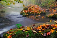 Nature email backgrounds. Autumn Stream