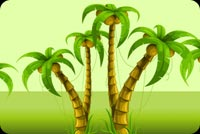 Coconut Trees Background
