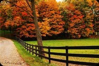 Fall Nature Fences Background