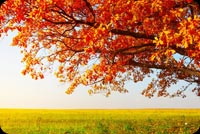 Nature email backgrounds. Autumn Tree