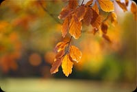 Blurred Autumn Leaves Background