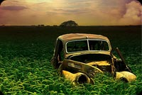 Old Beetle Car On The Wheat Field Background