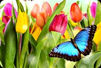 A Bright And Colorful Spring Background