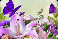 Spring Flowers & Butterflies Background