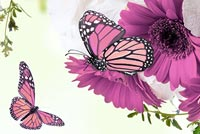 Spring email backgrounds. Sprint Floral & Butterflies